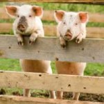 Ethically Produced Meat for Making Your Homemade Sausages