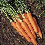 Carrot Wine Recipe