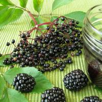 Blackberry and Elderberry Wine Recipe