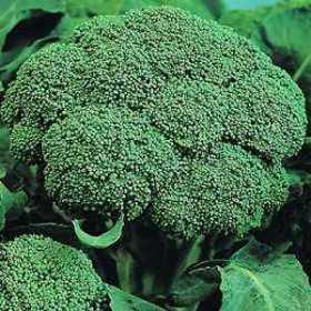 Vitamin Rich Broccoli