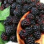 Blackberry Wine Recipe