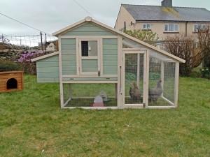 Chicken Coop & Hens