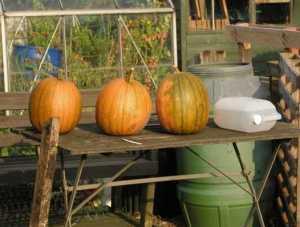 Vegetable & Fruit Growing in September