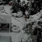 Chickens in Winter - The Garden