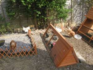 Broody Ark - Converted Rabbit Hutch
