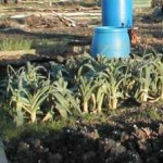 Vegetable & Fruit Growing in January